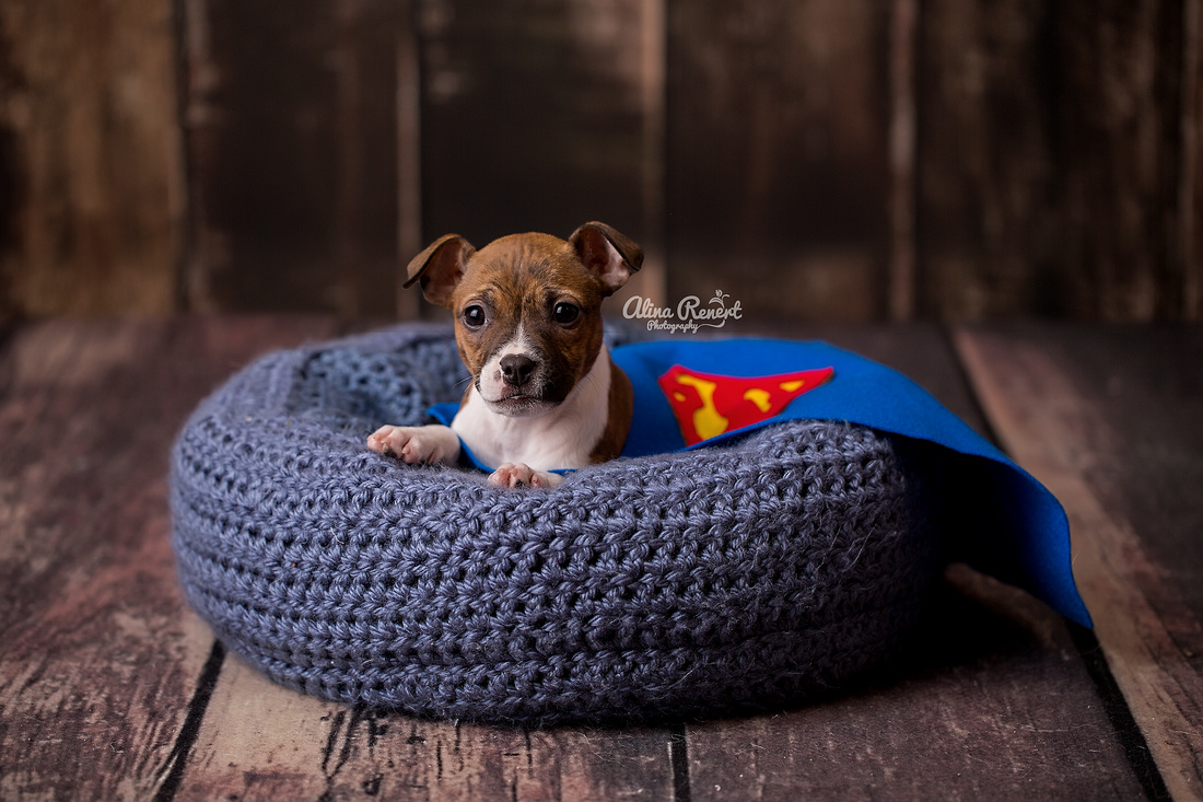 Chicogo Puppy Photographer Alina Renert